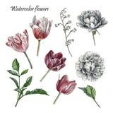 Bloemenreeks tulpen, rozen en bladeren Stock Fotografie
