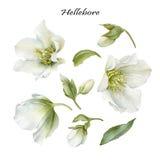 Bloemenreeks witte bloemen en bladeren Stock Foto