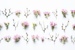 Bloemenregeling Stock Foto