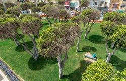 Bloemenregeling en rotondes in Malta stock afbeelding