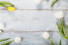 Bloemensamenstelling Frame van witte bloemen op blauwe achtergrond wordt gemaakt die Royalty-vrije Stock Afbeelding