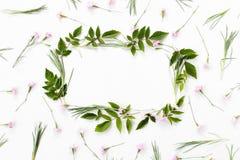 Bloemensamenstelling Kader van roze anjerbloemen die wordt gemaakt stock afbeelding