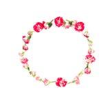 Bloemensamenstelling Kroon van roze bloemen op witte achtergrond wordt gemaakt die Vlak leg, hoogste mening Stock Afbeelding