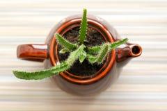 Bloemensamenstelling met cactus in een ceramische theepot en een mok, donker aardewerk, hoogste mening, theekransje stock afbeeldingen