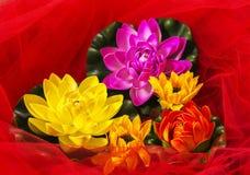 Bloemensamenstelling met rood Tulle Stock Afbeeldingen