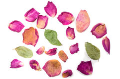 Bloemensamenstelling van droge roze bloemen De dag van de valentijnskaart `s Drie Royalty-vrije Stock Afbeelding