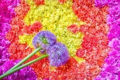 Bloemensamenvatting stock afbeeldingen