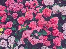 Bloemenscène in het bloeien Stock Afbeeldingen