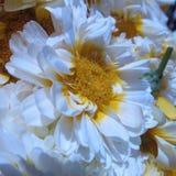 Bloemenschoonheid Royalty-vrije Stock Foto's
