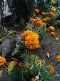 bloemenschoonheid in aard die vers gevoel geven Royalty-vrije Stock Foto's