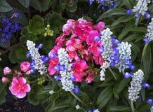 Bloemenschoonheid bij de Butchart-Tuinen Royalty-vrije Stock Afbeeldingen