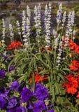 Bloemenschoonheid bij de Butchart-Tuinen Stock Foto's