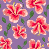 Bloementextuur met modieus naadloos hibiscuspatroon Stock Afbeeldingen