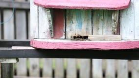 Bloementuin en bijenkorven stock video