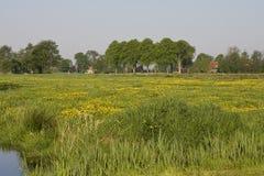 Bloemenveld, campo de flores imágenes de archivo libres de regalías