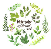 Bloemenwaterverfreeks Stock Foto's