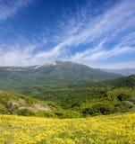 Bloemenweide in bergen stock foto's