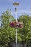 Bloemenweken Stock Foto