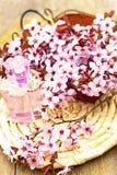 bloemessentie Royalty-vrije Stock Afbeeldingen