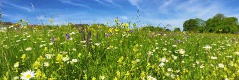 Bloemgebied in de lente Royalty-vrije Stock Afbeeldingen