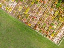 Bloemgebied in de zomer Lucht Foto Royalty-vrije Stock Foto's