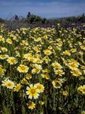 Bloemgebied die in Nationale parkaard bloeien Stock Foto