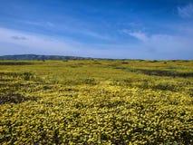 Bloemgebied die in Nationale parkaard bloeien Stock Fotografie
