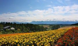Bloemgebied en blauwe hemel Royalty-vrije Stock Foto's
