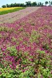 Bloemgebied met kleuren Royalty-vrije Stock Afbeelding