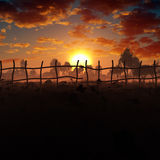 Bloemgebied in Misty Sunset Stock Afbeeldingen