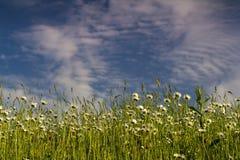 Bloemgebied in zomer stock afbeelding