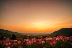 Bloemgebieden tijdens de warme avonden stock foto