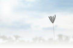 Bloemgras die op de achtergrond van de het onduidelijke beeldhemel van de windmotie blazen Stock Afbeeldingen