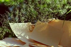 Bloemgras, document in windslag Stock Foto