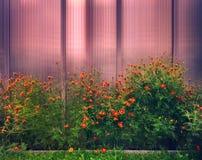 Bloemgrens in de tuin royalty-vrije stock afbeelding