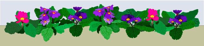 Bloemgrens met blauwe en roze sleutelbloemen Stock Foto's