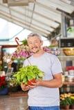 Bloemist in de bloemwinkel met Philodendron stock foto