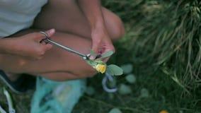 Bloemist scherpe bloemen om een boeket omhoog te maken stock footage
