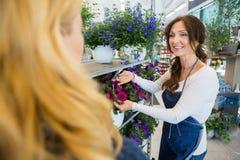 Bloemist Showing Flower Plant aan Klant in Winkel royalty-vrije stock afbeeldingen