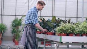 Bloemistmens die met bloemen bij een serre werken stock videobeelden