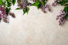 Bloemkader van purpere lilac bos op de concrete achtergrond van de steenoppervlakte Vlak leg, hoogste mening, minimaal stijlconce stock foto's