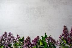 Bloemkader van purpere lilac bos op de concrete achtergrond van de steenoppervlakte Vlak leg, hoogste mening, minimaal stijlconce royalty-vrije stock afbeelding