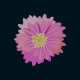 Bloemknop met bloemblaadjes van roze en geel in cente Royalty-vrije Stock Afbeelding