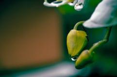 bloemknoppen en mier royalty-vrije stock afbeeldingen