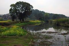 Bloemkolen dichtbij rivier Royalty-vrije Stock Afbeelding