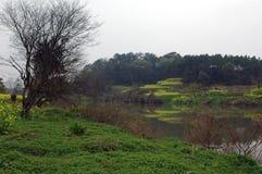 Bloemkolen dichtbij rivier Royalty-vrije Stock Afbeeldingen