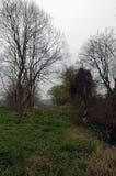 Bloemkolen dichtbij rivier Stock Afbeelding