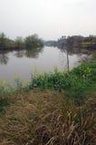 Bloemkolen dichtbij rivier Stock Foto