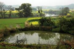 Bloemkolen dichtbij rivier in de lente Royalty-vrije Stock Foto