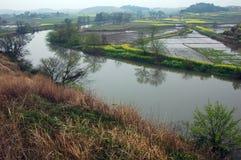 Bloemkolen dichtbij rivier in de lente Royalty-vrije Stock Afbeeldingen